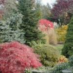 4 Season Planting for Color
