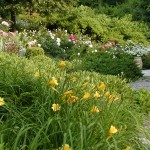 Landscape Design & Install