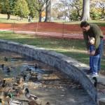 Stone Walls @ Rye Duck Pond