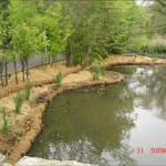 embankment stabilization, iris plantings