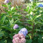 Perennial & Shrub Plantings
