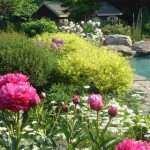 Perennial Garden with Shrubs