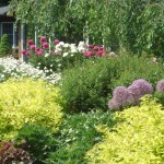 Spring Perennials Planting